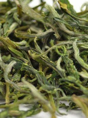 maofeng green